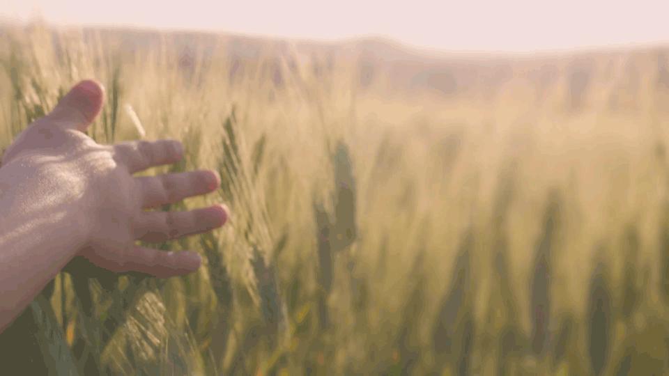 deblur-trigo